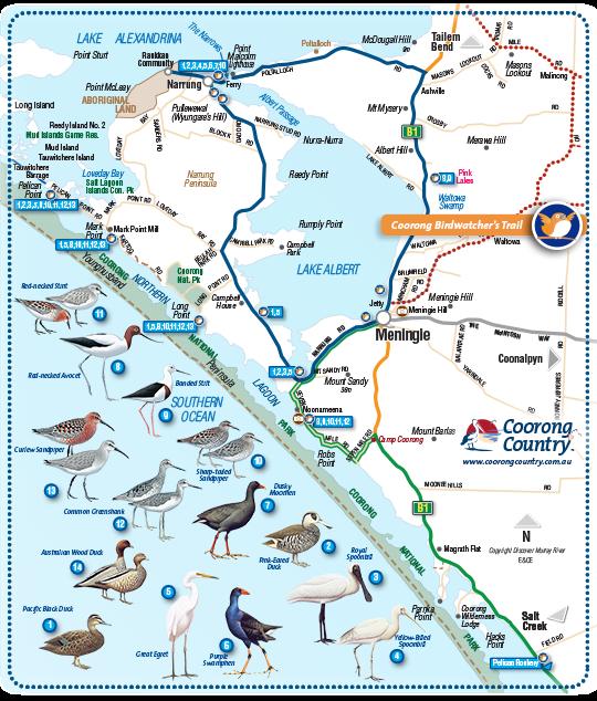 Coorong Birds Narrung Peninsula Map