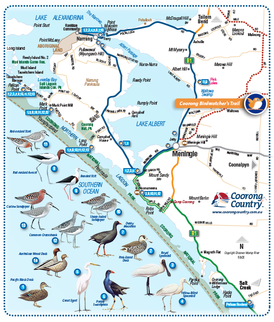 Coorong Birds Narrung Peninsula Map