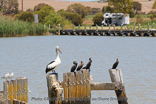 Coorong RV Friendly